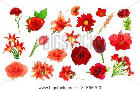 Collage of red color flowers, isolated on white