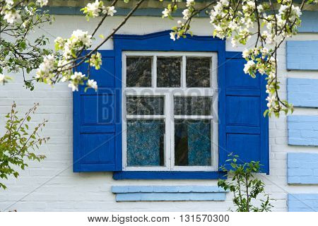 Flowers near the window with blue shutters