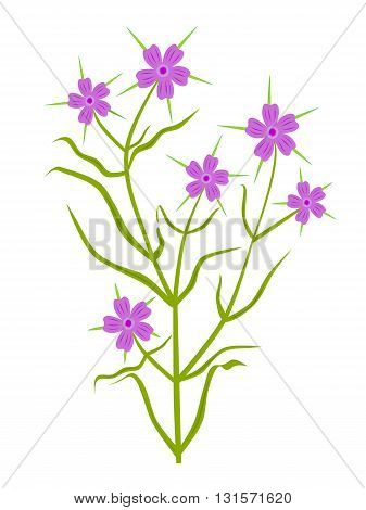 Plant with violet flower (Common Corncockle) - vector illustration.