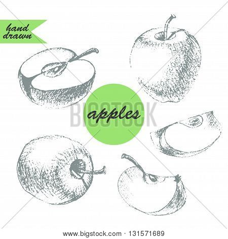 Set of apple sketches. Pencil drawing of apple apple half and apple slice in grey color