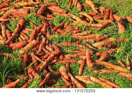 carrots on green grass, fruit, vegetables home, natural product