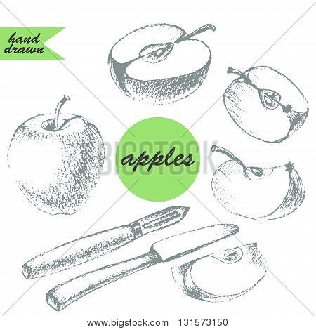 Hand drawn pencil sketch of apple apple half apple slice apple peeler and knife in grey
