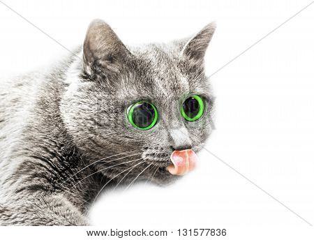 Adult cat with hyper eyed isolated over white