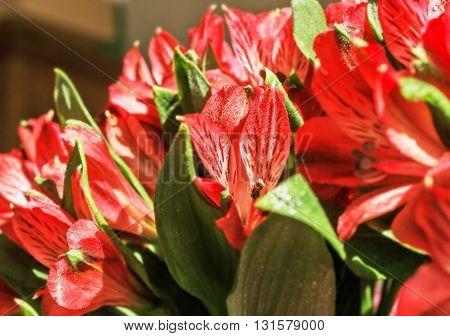 Nice bright bouquet of red alstromeria for happy