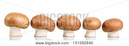 Brown fresh mushrooms champignons isolated on white background.