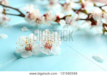 Blooming branch of tree on blue wooden background