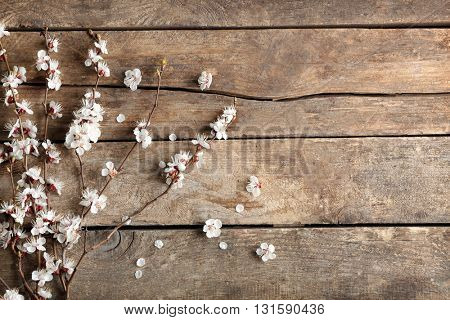 Blooming branch of tree on wooden background