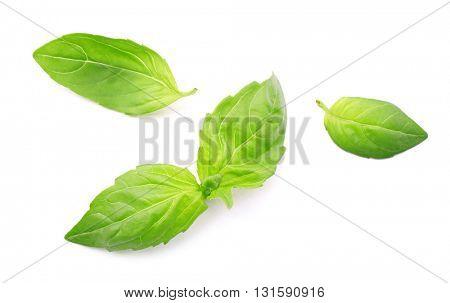 Fresh basil leaves group isolated on white