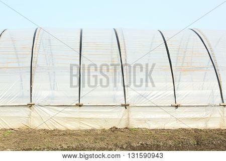 Greenhouses at farm