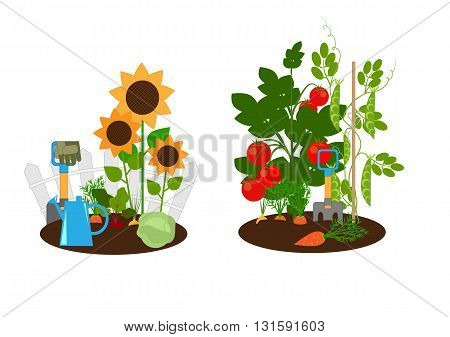 vegetable garden vegetable beds and garden tools vector illustration