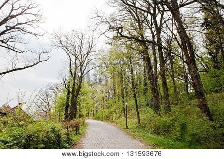 Road Through Landscape With Fresh Green Trees In Early Spring On Cloudy Day