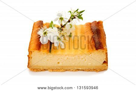 Slice cheesecake with  white tree blossoms isolated on white background.