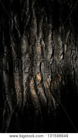 The bark of the tree on the border of light and shadow. Dark wood background. Natural dark wooden pattern