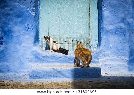 Cats in front of a door in the town of Chefchaouen in Morocco