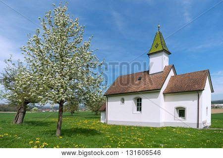 Oberhofen Chapel near Orsingen, Germany in spring amidst a meadow with yellow dandelion and blooming fruit tree