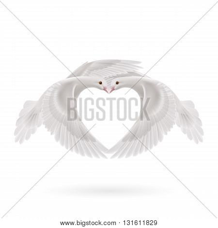 Two white doves makes the shape of the wings of the heart