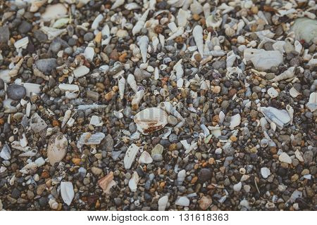 Tiny And Large Sea Shell And Rocks Texture Background