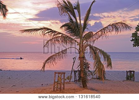 Palm Tree On The Patong Beach Against The Background Of Sunset