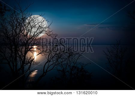 Tree against sky over tranquil lake. Silhouettes of woods and beautiful moonrise bright full moon would make a nice picture. Beauty of nature use as background. Outdoors.