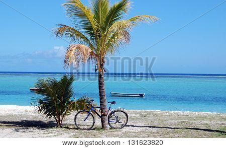 Bicycle next to palm tree on exotic beach in Mauritius