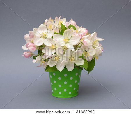 Bouquet of apple blossom in a decorative bucket on a gray background. Card. Spring. Wedding. The delicate beauty of spring. Gardening.
