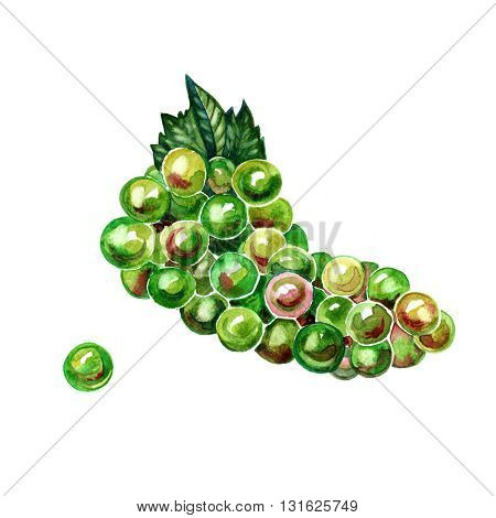 Watercolor brush of green grapes on white background