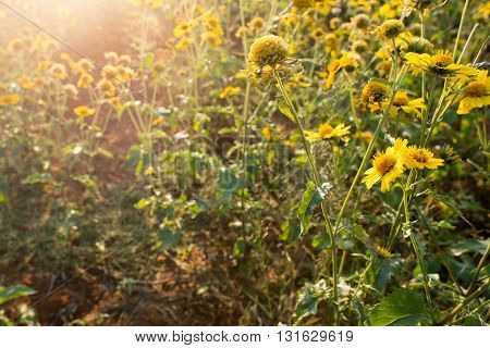 A garden of yellow wild flowers in the late afternoon sun.