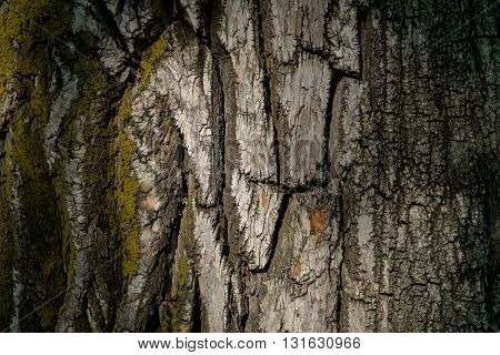 Tree bark covered with moss. Beautiful natural light background