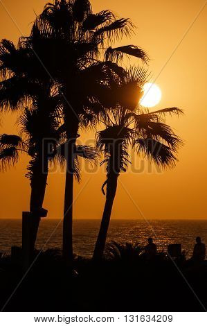 view on sunset behind palm trees on pier
