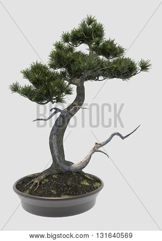 3D Illustration decorative bonsai tree isolated on white