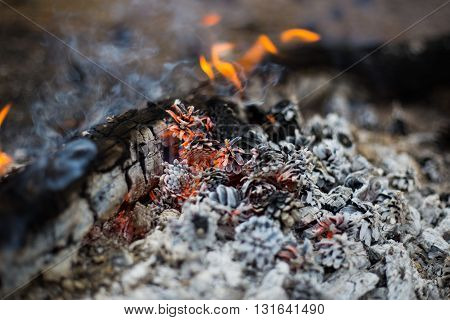 the fire in the pine wood fire and ashes