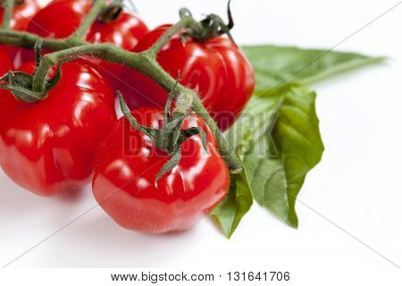 Truss cherry tomatoes with basil leaves, over white background.