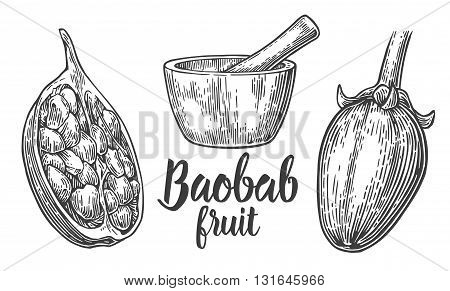 Baobab fruit and seeds. Mortar and pestle. Vector vintage engraved illustration on white background. Hand drawn sketch