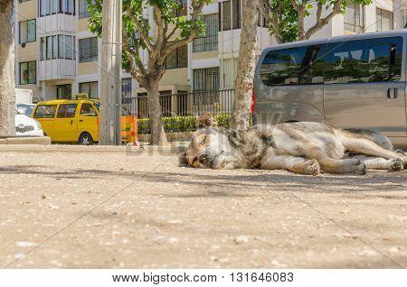Dog homeless on the street sleeping quiet