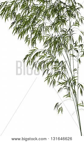 Bamboo isolated in white background - 3D render