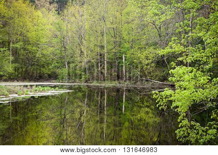 Forest lake surrounded by green trees in the spring in the evening. The nature of Russia.