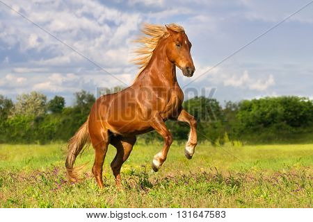Red horse with long mane rearing up outdoor