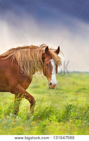 Beautiful red horse with long blond mane in spring field with yellow flowers against dark storm sky