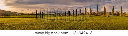 Panorama of Tuscan landscape of Val d'Orcia at sunset with cypress trees lined up