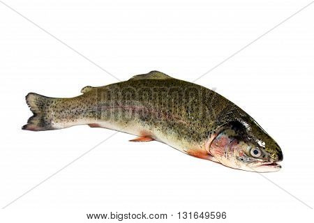 fresh raw untreated trout on a white background