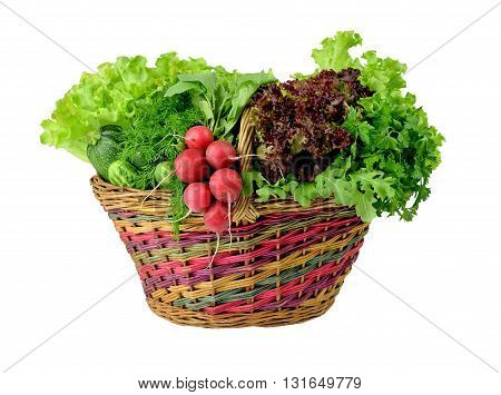 Old wicker basket and spring crop: lettuce parsleydill onions radishes zucchini arugula cucumber. Vitamins. Diet. Healthy eating. Vegetarianism. Agriculture. / Isolation on a white background without shadows /.Rustic style.