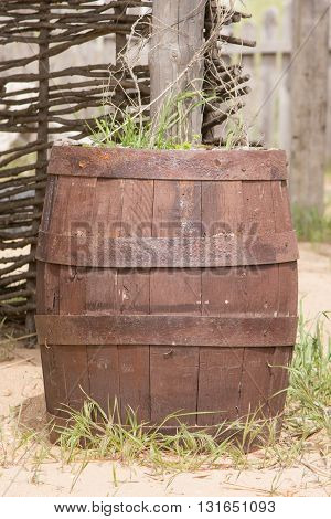 Old Wooden Barrel Adapted As A Bed For Flowers