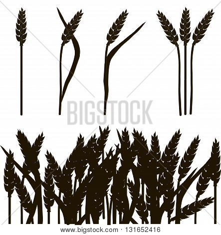 Black and white outline of wheat ears and wheat field, painting, vector illustration