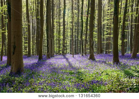 Springtime Blue Beach Forest (4)