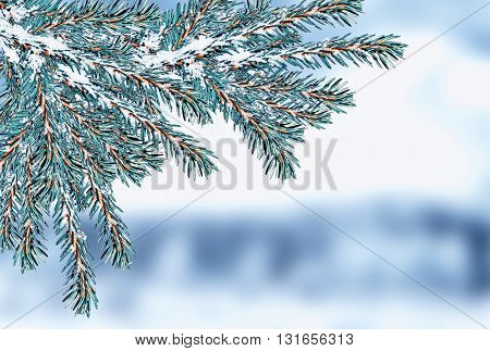 Winter forest. Winter landscape. Snow covered trees