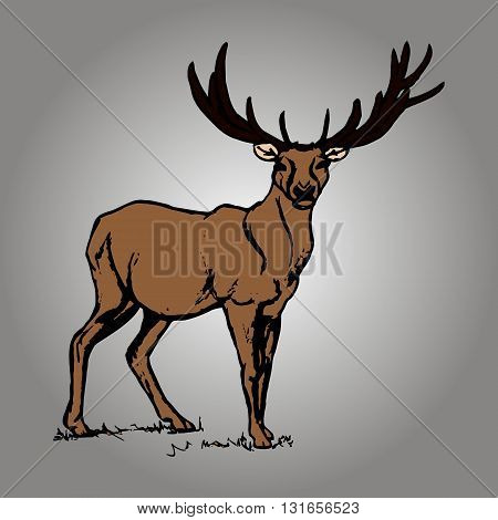 Graphic image of deer with big antlers. The reindeer pattern on a grey background. Vector illustration
