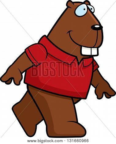 Beaver Walking