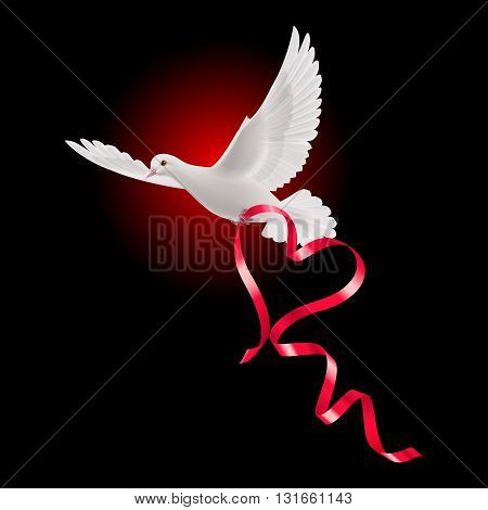White dove with red ribbon and the dark background.