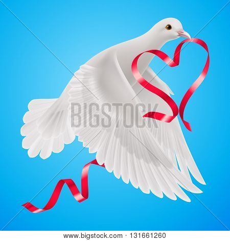 White dove with red ribbon with the blue background.