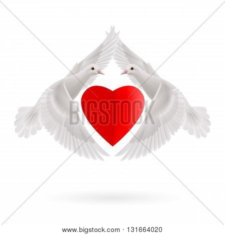Red heart between two white flying doves